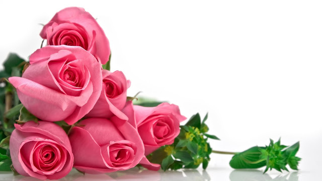 Nguồn gốc hoa hồng Đà Lạt loài hoa của tình yêu