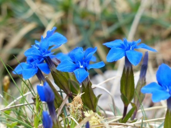 Tặng hoa tươi theo cung hoàng đạo bí kíp tặng hoa ý nghĩa hơn