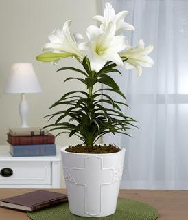 Hướng dẫn cách bảo quản hoa ly Đà Lạt dịp tết