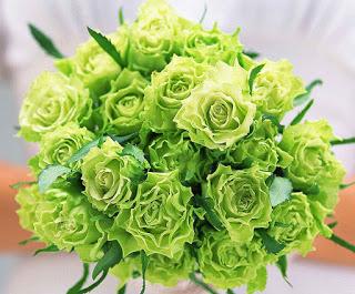 Giới thiệu về hoa hồng Đà Lạt