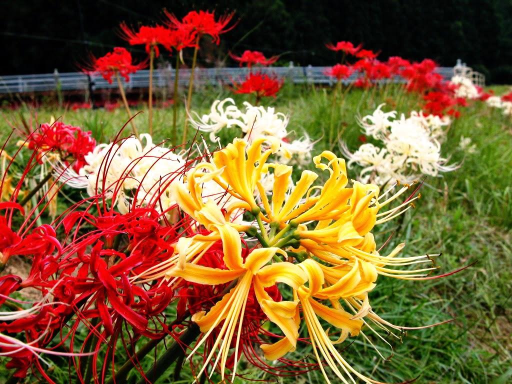 Tìm hiểu về ý nghĩa và sự tích của 18 loài hoa