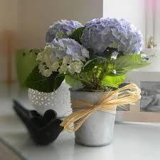 Hoa cẩm tú cầu-Hoa tươi Đà Lạt123