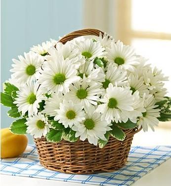 3 Cách cắm hoa cơ bản cho ngày tết thêm rộn ràng