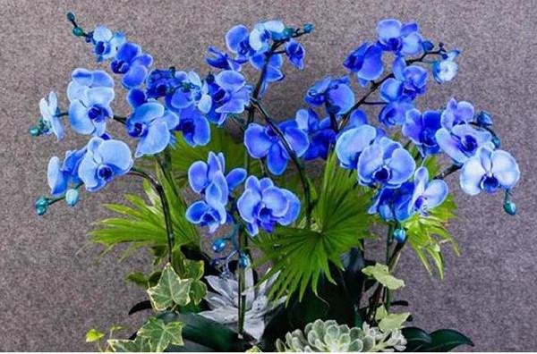 Ý nghĩa của lan hồ điệp theo màu sắc của hoa
