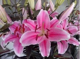 Hoa Ly Hồng Thơm 5 tai