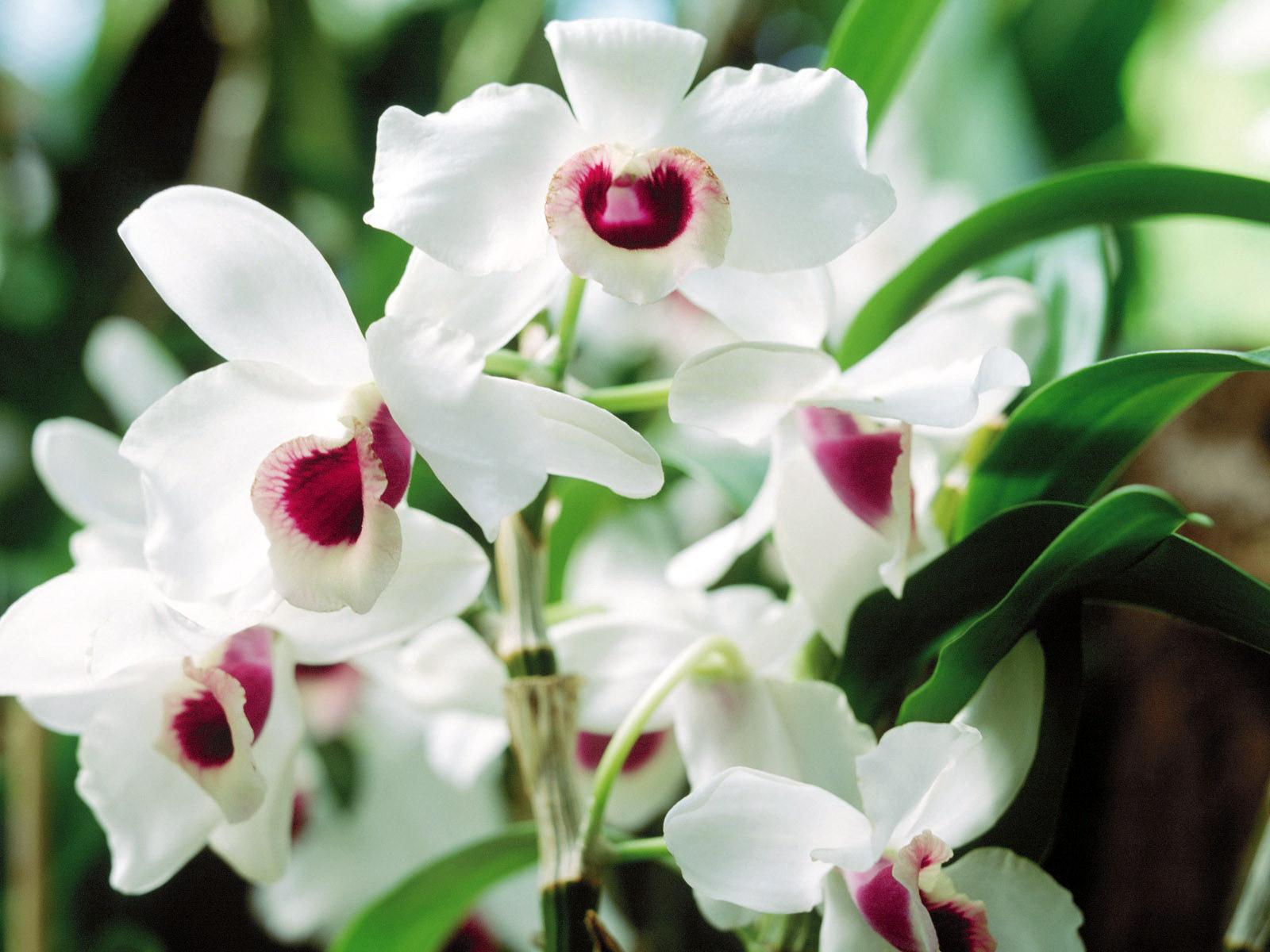 Các loại hoa nên chưng trong ngày tết để nhiều may mắn