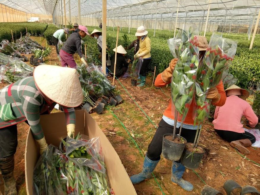 Bảng báo giá hoa tết 2021 – Hoa tươi Đà Lạt