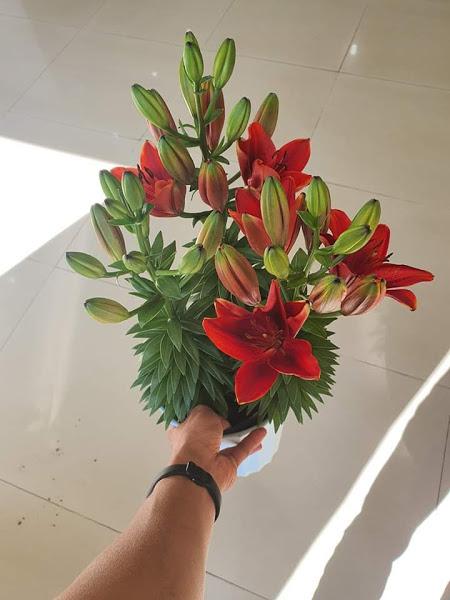 Hoa tươi Đà Lạt - Hoa lyly  Đà Lạt CHẬU LÙN màu đỏ