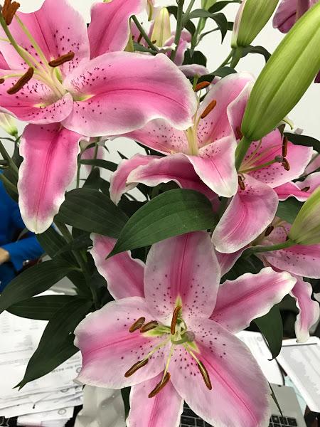 Hoa tươi Đà Lạt - Hoa lyly Đà Lạt đỏ ù